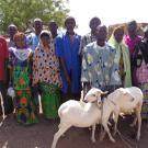 Faso Gneta Group