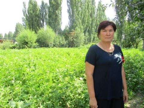 photo of Zhenishbubu