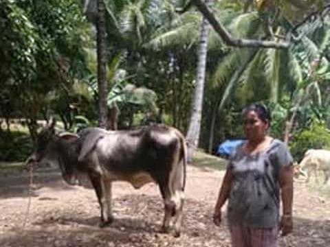 photo of Armeda